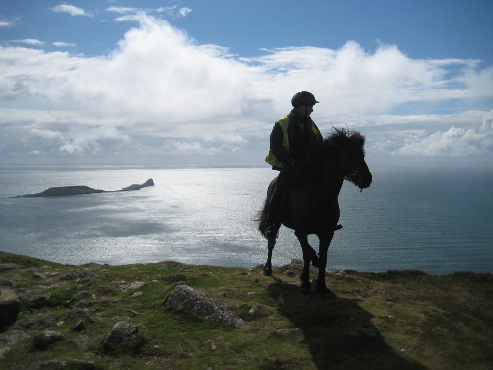 Little Viking Horse Wisdom (4/5)