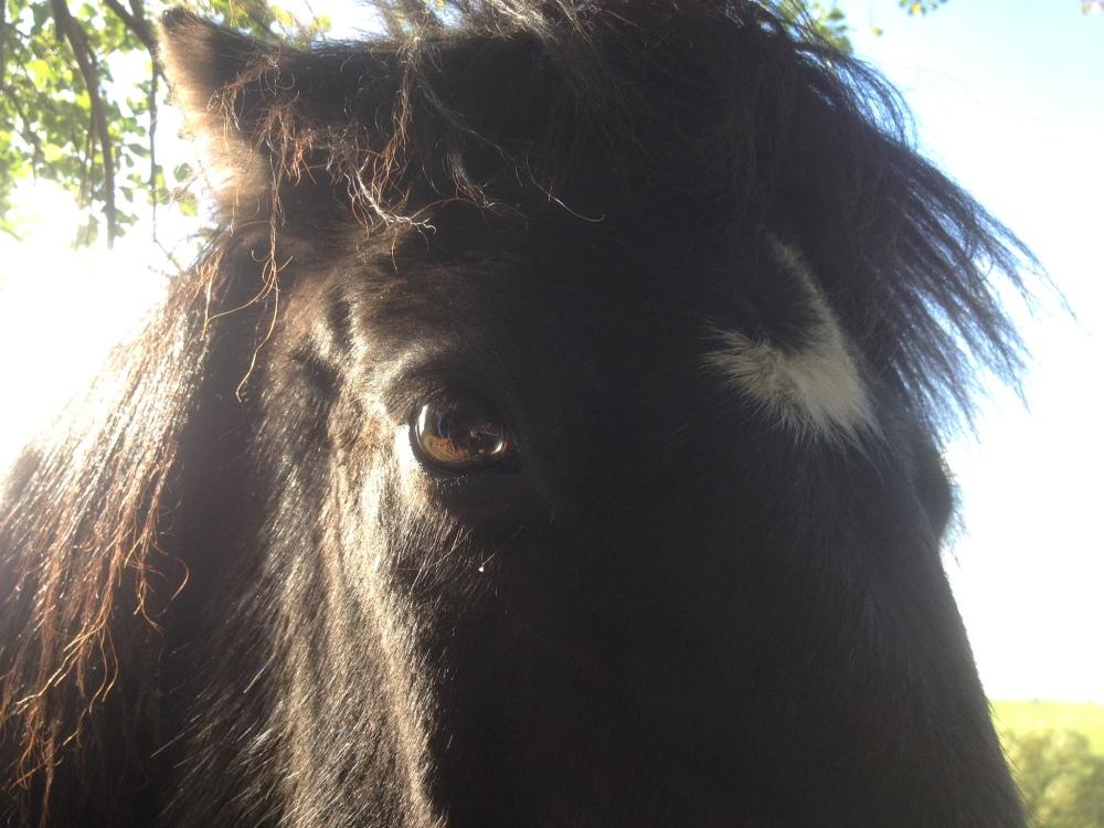 Little Viking Horse Wisdom (2/5)