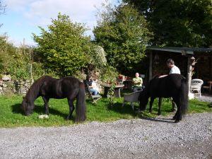 New friends for Little Viking Horse