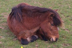 Flicka takes a rest