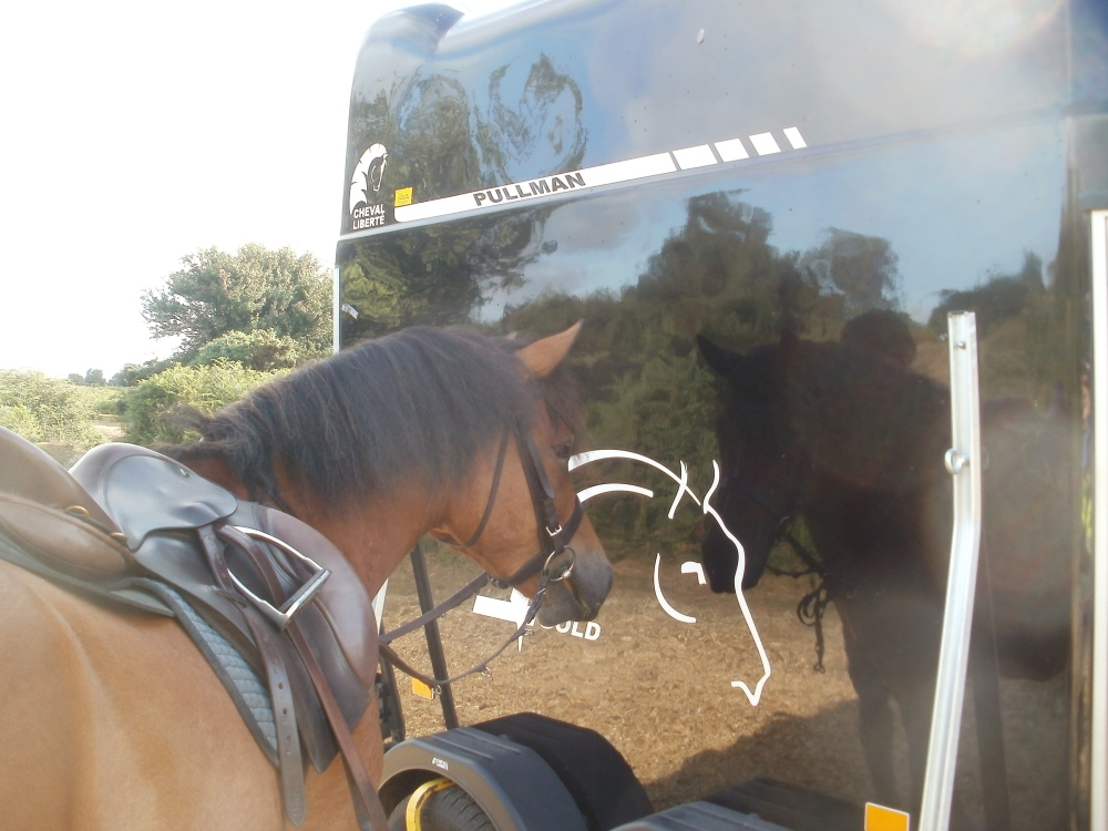 The Ramblings of Icelandic Horses in the New Forest (5/6)