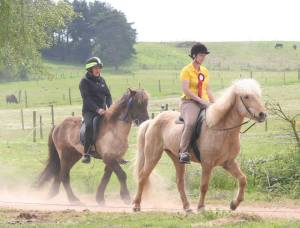 Blondie Showing his Loose Rein Tolt