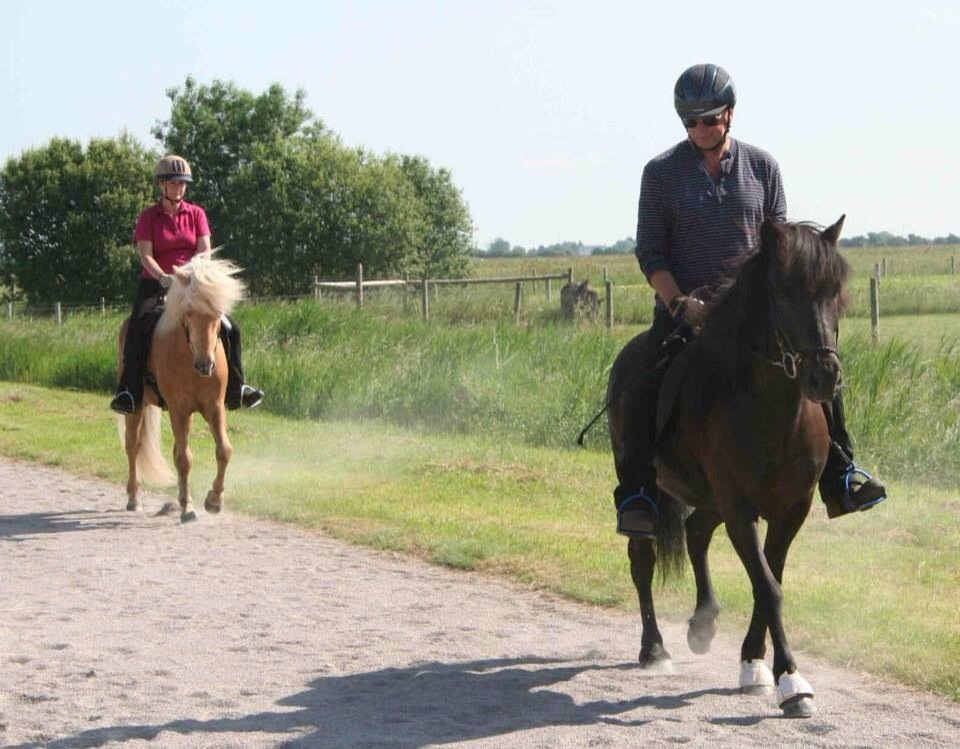 The British Icelandic Horse Championships and Festival 2014 (3/6)