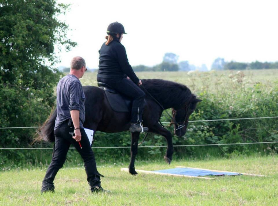 The British Icelandic Horse Championships and Festival 2014 (5/6)