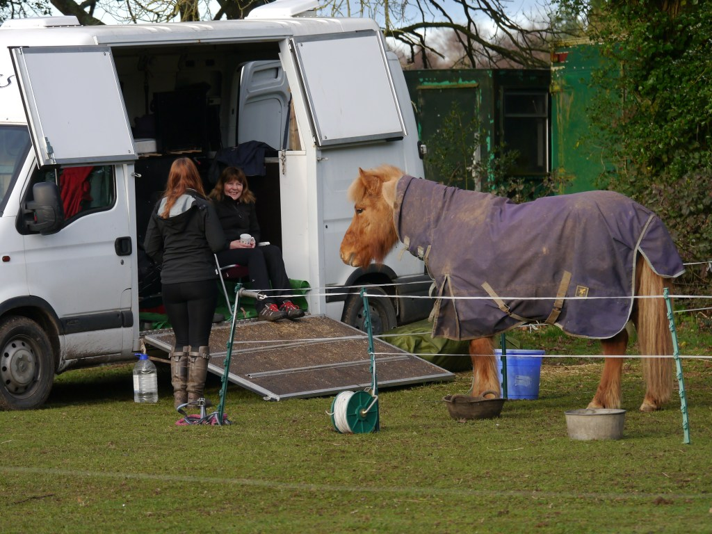 """Helgi says  """"It's my Stable on Wheels, can I come in please?"""""""