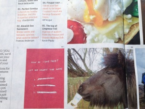 Little Viking Horse in the Guardian Magazine